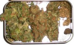Strain Reviews - Medical Marijuana Reviews, Cannabis Seeds , Glass Reviews