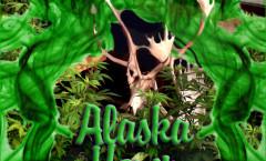 Hash-Plant